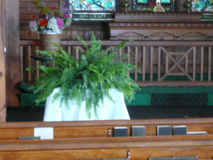 2011 Church ferns